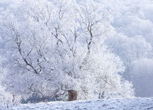 Frozen  tree withe snow winter magic Landscape Royalty Free Stock Image