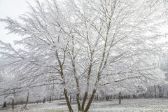 Frozen  tree withe snow winter magic Landscape Royalty Free Stock Photography