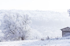 Frozen  tree withe snow winter magic Landscape Stock Image