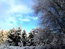 frozen trees Στοκ Φωτογραφία