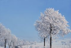 Frozen trees. Around the road Royalty Free Stock Photography