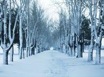 Frozen trees Royalty Free Stock Photo
