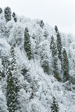 Frozen trees Royalty Free Stock Images