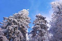 Frozen trees Stock Image