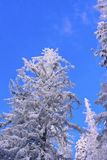 Frozen trees Stock Photos