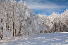 Frozen trees. Snow landscape with frozen trees Stock Photography