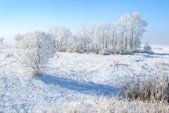 Frozen trees Stock Photography
