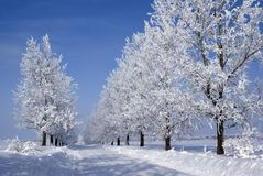 Free Frozen Trees Stock Images - 4146864