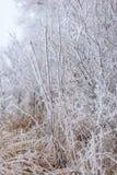 frozen trees Στοκ Εικόνες