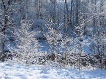 frozen trees Στοκ εικόνα με δικαίωμα ελεύθερης χρήσης