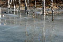 frozen trees Στοκ φωτογραφία με δικαίωμα ελεύθερης χρήσης