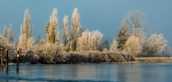 frozen trees Στοκ Φωτογραφίες