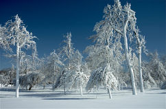 Frozen Trees Stock Photos