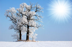 Frozen trees Stock Image