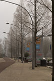 Frozen trees Amsterdam Stock Image