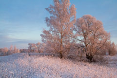 Frozen trees in beautiful winter morning Stock Image