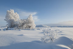 Frozen trees, Black mount Royalty Free Stock Photo
