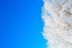 Frozen trees and branches . Beautiful white winter. royalty free stock photo
