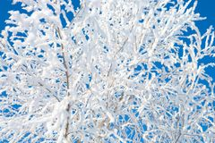 Frozen trees and branches . Beautiful white winter stock photo