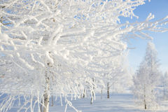 Frozen trees and branches Royalty Free Stock Image