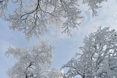 Frozen trees and branches covered by snow. Beautiful white winter landscape. Blue sky at background Royalty Free Stock Image