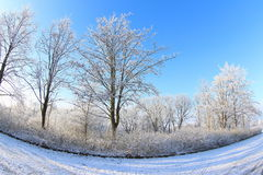 Sunny Winter Day Royalty Free Stock Photography