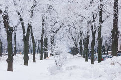Frozen trees on city lane Royalty Free Stock Images