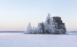 Frozen trees at cold winter day Stock Photo