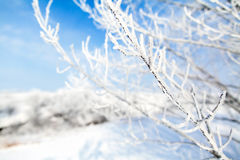 Frozen trees with cool blue winter sky Stock Images
