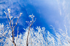 Frozen trees with cool blue winter sky Royalty Free Stock Photo