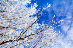 Frozen trees with cool blue winter sky Royalty Free Stock Photos
