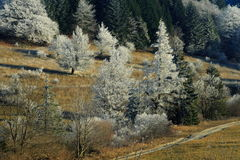 Frozen trees in countryside. High angle view of white frozen trees in countryside with thawed ground Royalty Free Stock Photo