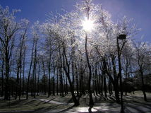 Frozen trees covered with ice during wintertime stock image