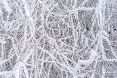 Frozen trees. Covered with white hoarfrost Royalty Free Stock Photography