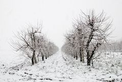Frozen trees in december Royalty Free Stock Image