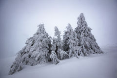 Frozen trees in deep snow - extreme winter landscape Stock Image