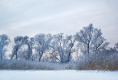 Frozen trees and dry grass Royalty Free Stock Image