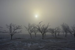 Frozen trees and fog 01 Royalty Free Stock Images