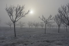 Frozen trees and fog Stock Photos
