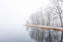 Frozen trees on a foggy shoreline. Frozen trees and boats on the foggy shore of the Nieuwe Meer lake in the Amsterdamse bos, the Netherlands royalty free stock photography