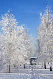 Frozen trees in the forest Stock Image