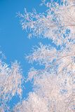 Frozen trees in the forest sky background, tree branches covered hoarfrost with white snow stock photos