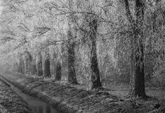 Frozen trees. Frosted trees along a ditch in the netherlands. Typical dutch picture stock images