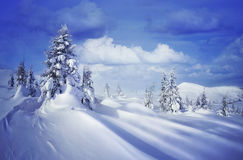Frozen trees on Karpaty mountains. Royalty Free Stock Photography
