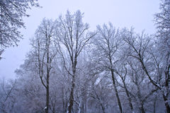 Frozen trees landscape. Frozen trees over the winter sky landscape Royalty Free Stock Photo