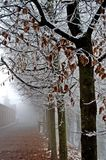 Frozen trees. Frozen leaves and trees in a misty and cold day of winter Royalty Free Stock Photo