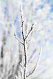 Frozen trees macro Royalty Free Stock Images