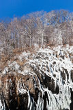 Frozen trees on mount cliff Stock Photos