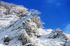 Frozen trees on mountain Stock Photo