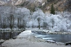 Frozen trees. Near the small river stock photography
